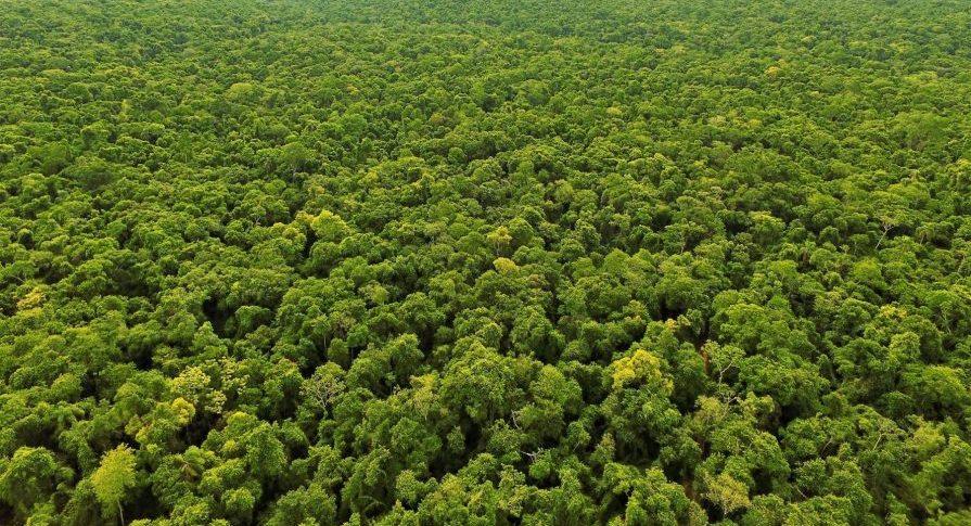 Vista aérea da floresta