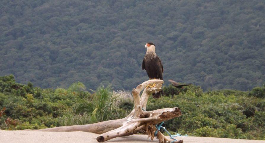 Parque do Prelado - Fauna