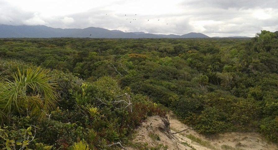 Apa Ilha Comprida - Flora - Restinga