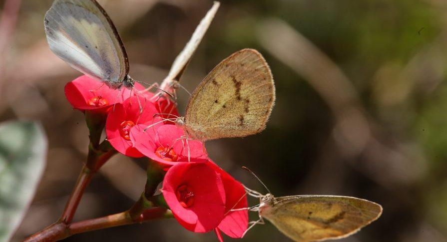 Parque Estadual Itapetinga - Fauna e Flora