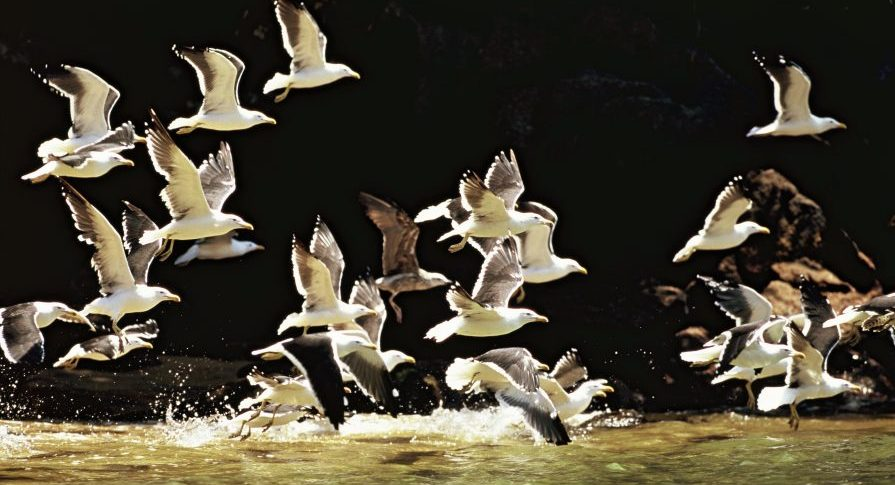 PE Ilha Anchieta - Trilha do Saco Grande