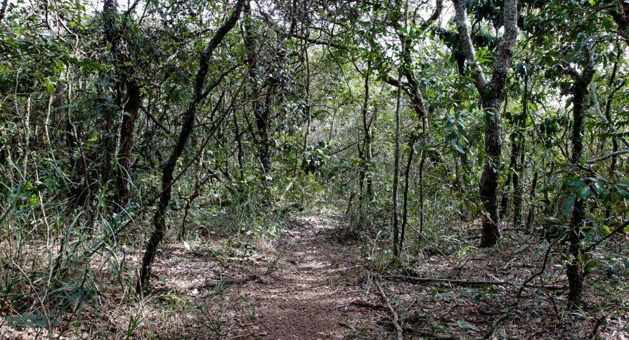 PE Vassununga - Trilha2