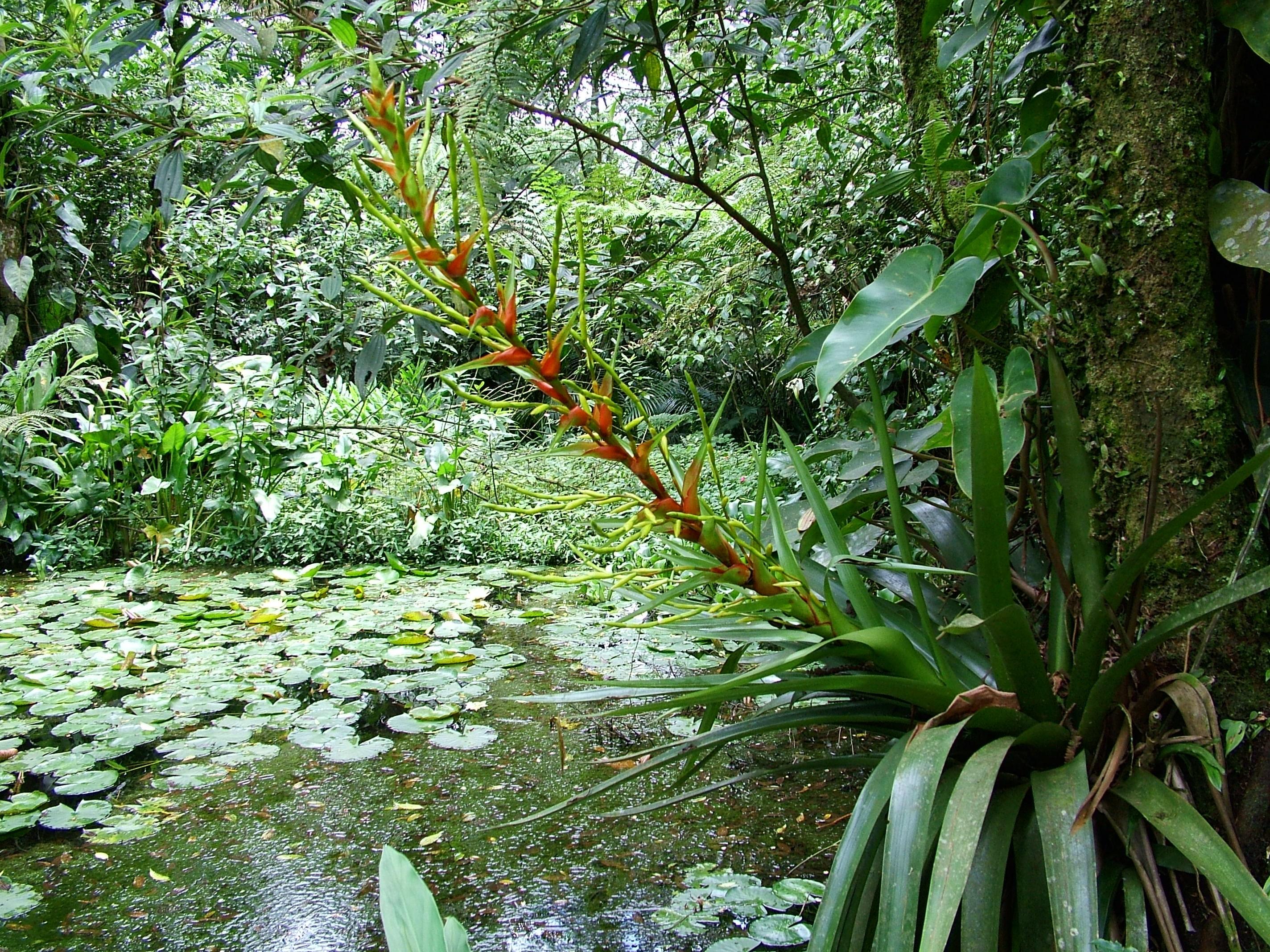 Rebio Paranapiacaba - Flora - margem do rio