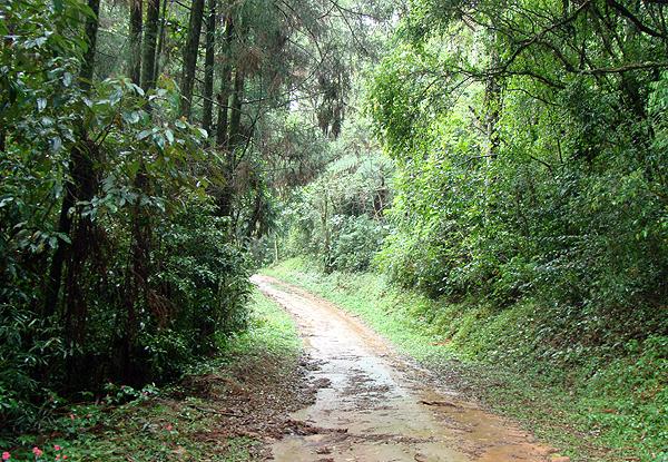 Parque Estadual Cantareira trilha mata