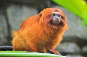 Caatinga tem 182 animais ameaçados, 10% dos monitorados estão sob risco