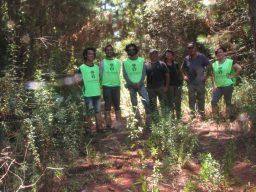 Voluntários mapeiam micos na Flona de Capão Bonito